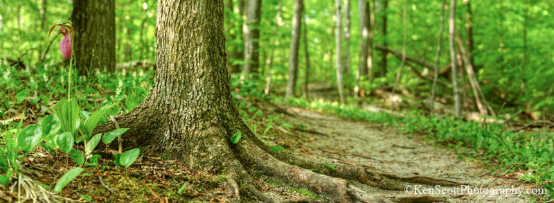 Forest Protection Online Classes